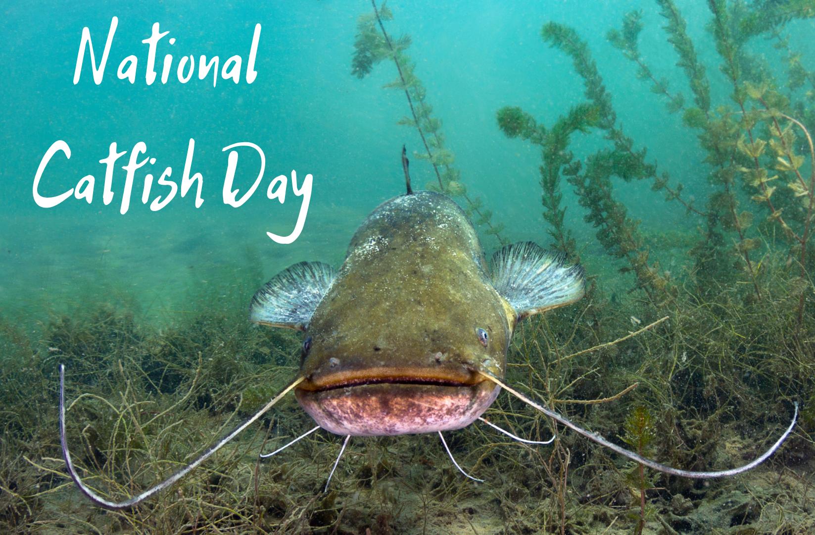 Catfish Day