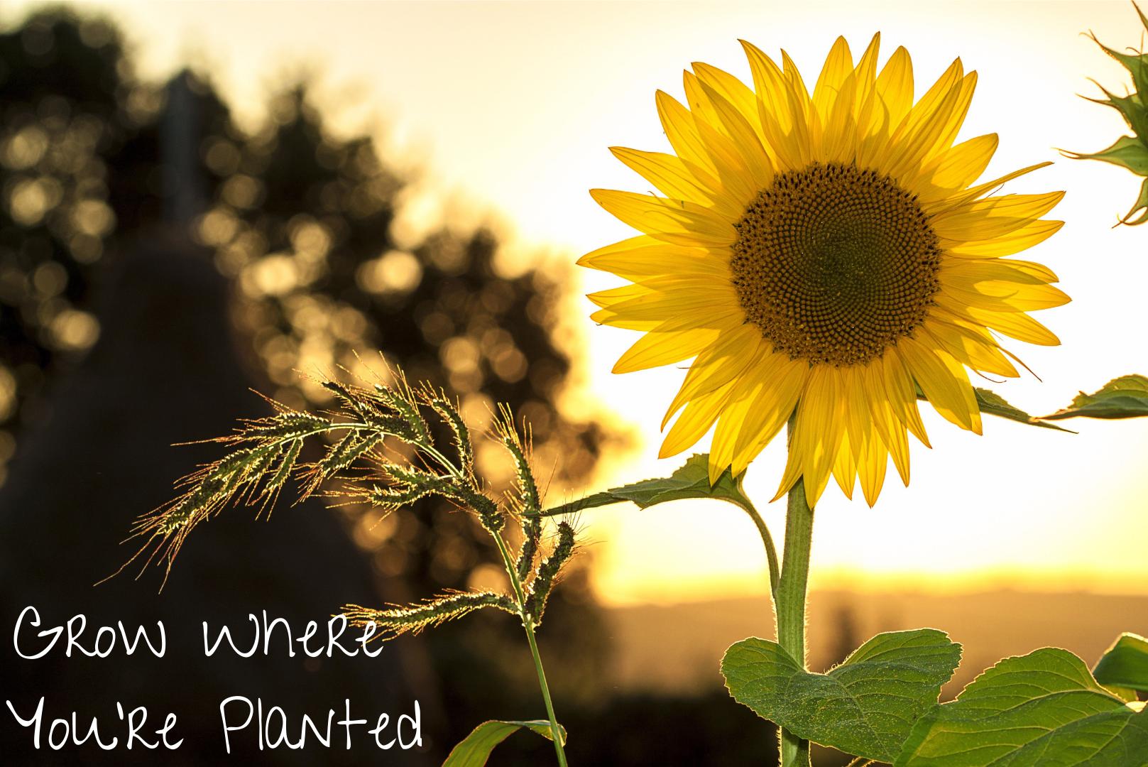Plant A Flower